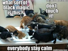 Meanwhile, at the crazy cat lady's house