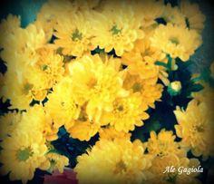 Ah as flores...