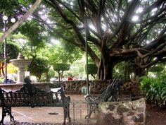 La Plaza de la Constitucion - Cuernavaca, Mexico.  Great place to go hang out.  Mariachis, shops, food.  Great place.