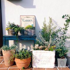 Organic Gardening Near Me Gravel Garden, Garden Pots, Garden Landscaping, Green Plants, Green Flowers, Container Plants, Container Gardening, Small Garden Corner, Greenhouse Gardening