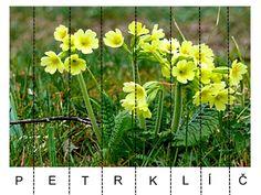 Pro Šíšu: Jarní květiny - skládačka Spring Activities, Activities For Kids, Montessori, 1, Nursery, Education, Puzzle, Children, School