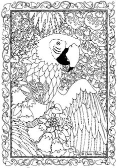 Free Rainforest Coloring Pages  Toucan coloring picture sheets