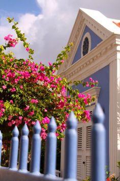 Bouiganville in Curacao - such color!