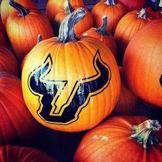 #USF pumpkin
