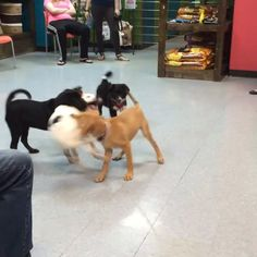 Fun times at #henryandrumble as we started another new puppy class tonight in conjunction with the Humane Society of West Michigan.
