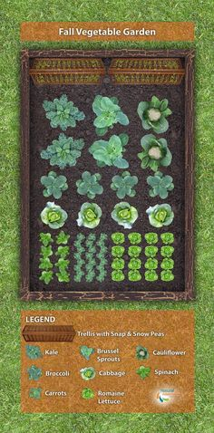 Fall Vegetable Garden Plan - Plant these vegetables in mid- to late-summer for a bountiful fall harvest!
