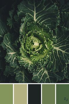ZJ Colour Palette 549 #colourpalette #colourinspiration