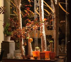 Bare tree trunks with light across them - great imagery day and night #fall Fantastic autumn window display at Florali.