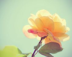 Roses Floral Flowers Fine Art Photography Yellow Cream Aqua Turquoise Blue Peach Green