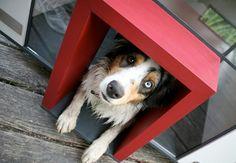 Dog door access