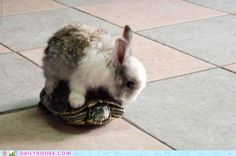 a NEW take on the tortoise & the hare!