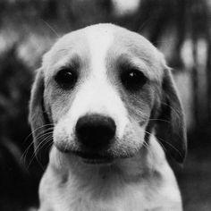 Precious puppy...