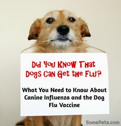 How to protect your dog from the flu (VIDEO)