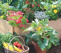Freudengarten - 18 Gemüsesorten zum Säen im Sommer (und zum Ernten im Herbst)