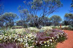 Norman Jamison | Wildflowers east of Geraldton,Western Australia