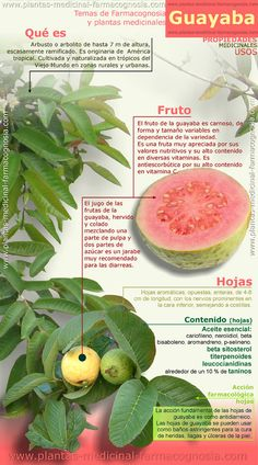 11 Important Benefits Of Guava Fruit + Guava Nutrition Facts Guava benefits - - motivation via Important Benefits Of Guava Fruit + Guava Nutrition Facts Guava benefits - - motivation via Guava Nutrition, Health And Nutrition, Health Tips, Health And Wellness, Holistic Nutrition, Nutrition Tips, Health Care, Guava Benefits, Fruit Benefits