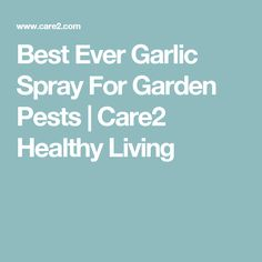 Best Ever Garlic Spray For Garden Pests | Care2 Healthy Living