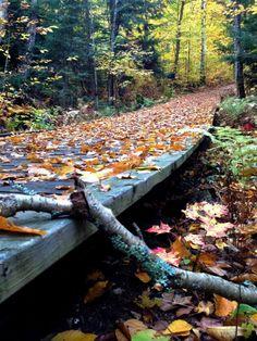 #Fall in #Muskoka, #Canada | Picfari.com