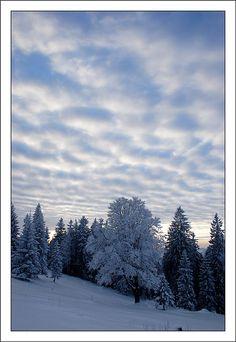 La Chaux-de-Fonds, Switzerland Copyright: Fabien Frochaux Europe, Copyright, Ciel, Beautiful World, Switzerland, Trees, Mountains, Places, Nature