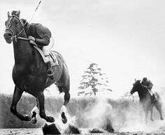 Two weeks after he won the Jersey Stakes, Citation won the 1948 Belmont Stakes and the completion of the Triple Crown.