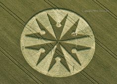 Chute Causeway nr Tidcombe, Wiltshire, England, UK, 10th August 2013 | Wheat OH.