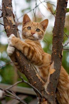 Orange tabby kitty in tree