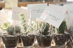 Succulents for wedding Bouquets, Button Holes, Bonbonnieres etc. Atwell Cockburn Area image 5