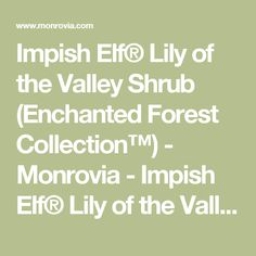 Impish Elf® Lily of the Valley Shrub (Enchanted Forest Collection™) - Monrovia - Impish Elf® Lily of the Valley Shrub (Enchanted Forest Collection™)