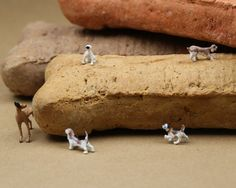 Dog Biscuits Miniature Diorama Photograph 8x10 by EastPhotos, $10.00
