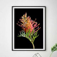 Printable Pink Grevillea Art Australia Native Flower | Etsy Australian Photography, Australian Native Flowers, Professional Photo Lab, Flower Artwork, Gifts For Nature Lovers, Photo Colour, Large Wall Art, Vivid Colors, Nativity