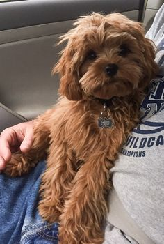 Yorkshire Terriers are a small type of toy dog. - Yorkshire Terriers are a small type of toy dog. Weigh a slim …. Cute Dogs And Puppies, Pet Dogs, Pets, Doggies, Dog Cat, Yorkshire Terriers, Biewer Yorkshire, Cavapoo Puppies, Poodle Puppies