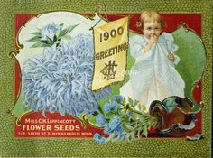 seeds_catalogs-00093 093-Aster, Girl, Greeting, Frame, Vase, Flag      ...  botanical floral botany natural naturalist nature flowers flower beautiful nice flora plants blooming ArtsCult.com Artscult ArtsCult vintage printable public domain 300 dpi commercial use 1800s 1700s 1900s Victorian Edwardian art clipart royalty free digital download picture collection pack paintings scan high qulity illustration old books pages supplies colla