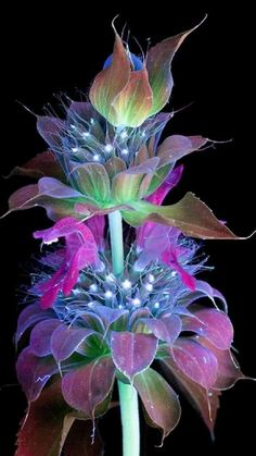 Strange Flowers, Unusual Flowers, Unusual Plants, Rare Flowers, Amazing Flowers, Pretty Flowers, Purple Flowers, Exotic Plants, Pink Roses