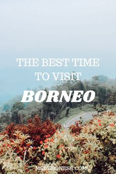Home to around 222 mammals 420 birds 100 amphibians and 394 fish Borneo is a haven for wildlife and nature lovers. If you're wondering when is the best time to visit Borneo island here's a complete guide for your Borneo Travel, Malaysia Travel, Asia Travel, Bangkok Travel, Croatia Travel, Nightlife Travel, Bangkok Thailand, Hawaii Travel, Thailand Travel