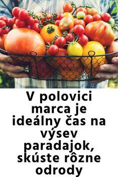 """Staršie odrody čiernych paradajok sú v skutočnosti skôr tmavohnedé či mahagónové. Novšia odroda, ako je čerešňové Indigo Rose, je skutočne čierna (či tmavofialová, skrátka indigová), pretože obsahuje množstvo zdraviu prospešných antokyanov. Chuť týchto čiernych paradajok je veľmi odlišná a nie každý si ju obľúbi. Lykopén červených paradajok je našťastie tiež blahodarný. Vyskúšať možno aj ďalšie """"pravá čierna"""" paradajka, ako je Indigo Blue Berries a dvojfarebné a veľmi pekné Blue Gold Berries… Vegetables, Food, Meal, Essen, Vegetable Recipes, Hoods, Meals, Eten"""