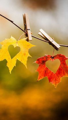 Image about love in Seasons by Aya Khala on We Heart It Heart In Nature, Heart Art, Fall Pictures, Fall Photos, Fall Wallpaper, Nature Wallpaper, Autumn Photography, Creative Photography, Fall Displays
