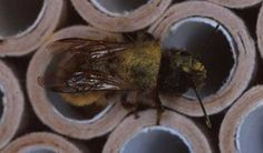 How to make a bee hotel - Projects: Wildlife gardening - gardenersworld.com