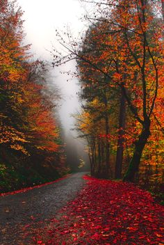 Rainy autumn road [unable to determine location or photographer] (autumn leaves nature)