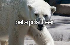 I know it's still a bear, but I've always had a liking towards Polar Bears. I think they are so pretty!