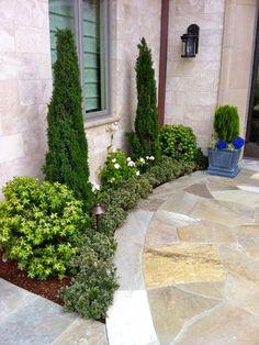 italian cypress for vertical design - low maintenance