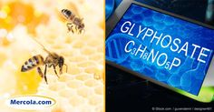 Glyphosate, the active ingredient in Monsanto's Roundup herbicide, has been classified as a carcinogen and has now been found in alarming levels in U.S. honey. http://articles.mercola.com/sites/articles/archive/2016/11/15/glyphosate-honey-contamination.aspx