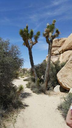 Joshua Tree hike,  Palm Springs,  CA