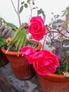 Ayeza Khan, Planter Pots, Plant Pots