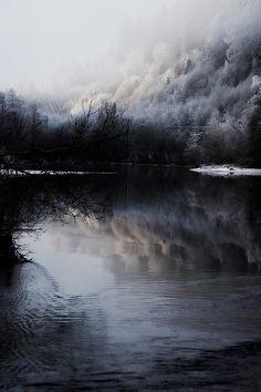 Winter forest by Åsmund Isaksen