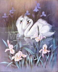Saint-Saens : The Swan ( Le Cygne ) - Carnival of the Animals Swan Pictures, Bird Pictures, Mosaic Pictures, Swan Painting, Image Nature, Water Lilies, Bird Prints, Illustrations, Animal Paintings