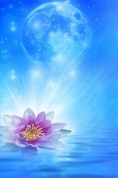 The lotus can also be thought of as a symbol of the sun and the sun in its turn can be thought of as a symbol of the Great Central Sun which is the glory and all pervading Life of the universe. When the chakras or psychic centres in the body are illustrated, they too are often pictured like lotuses.