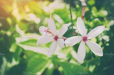 Beautiful white flower by IIrinaSS on @creativemarket