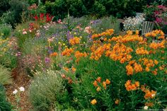 Cultural Natives-- Summer Dry Garden