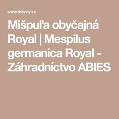 Mišpuľa obyčajná Royal | Mespilus germanica Royal - Záhradníctvo ABIES