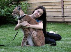 Lynx Pet